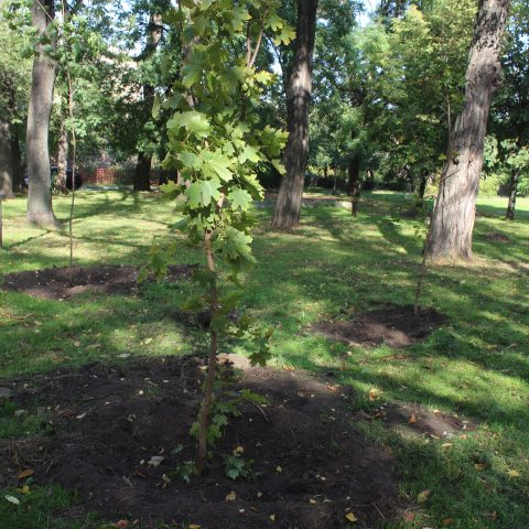 Запоріжжя приєдналося до акції «Мільйон дерев за 24 години» проекту «Озеленення України»